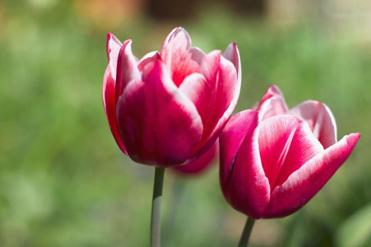 Der Frühling istda!